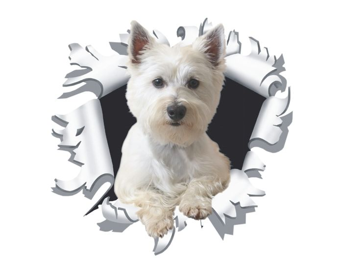 Hondje uit kogelgat sticker 17x90